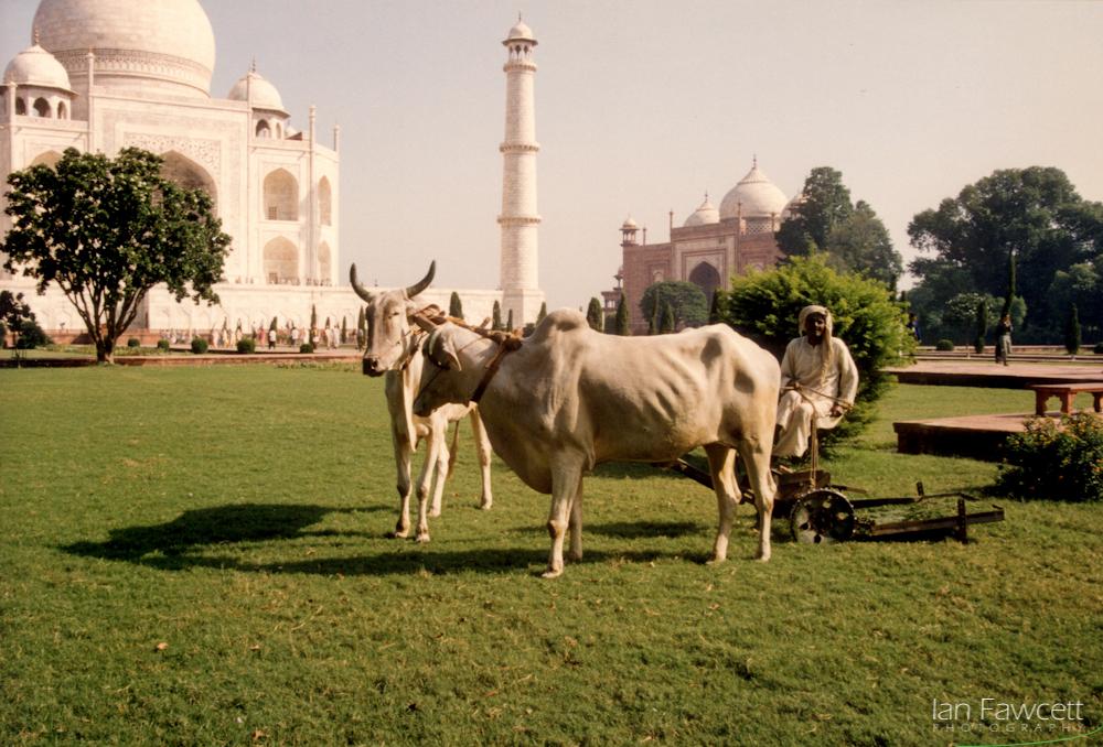 199310 - 014 - India