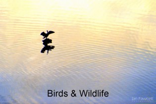 Birds & Wildlife